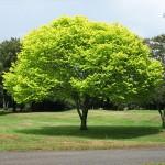 árboles Es-Ru