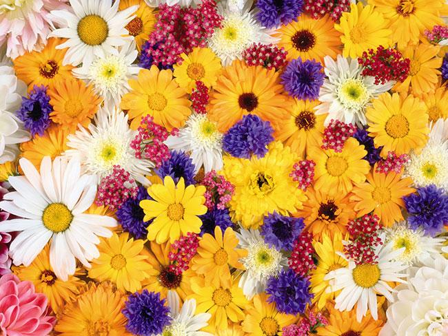 Flowers En-Ru