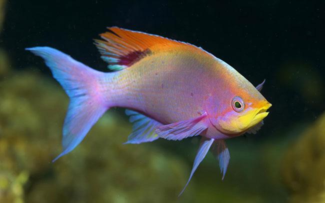Fish En-Ru