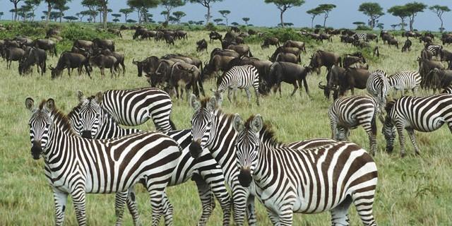 Animals En-Ru — Английские слова на тему Животные