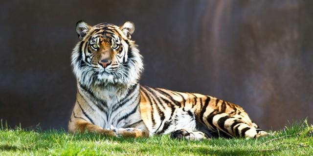 Animals in a Zoo En-Ru — Английские слова на тему Животные в зоопарке