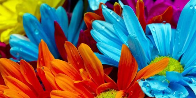 Flowers En-Ru — Английские слова на тему Цветы
