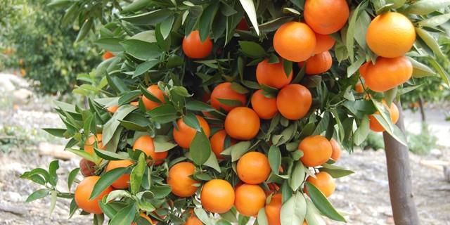 фруктовые деревья фото
