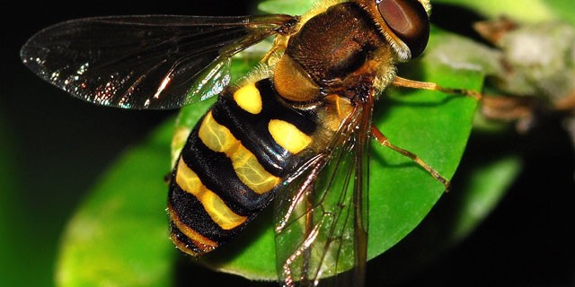 Insects En-Ru — Английские слова на тему Насекомые