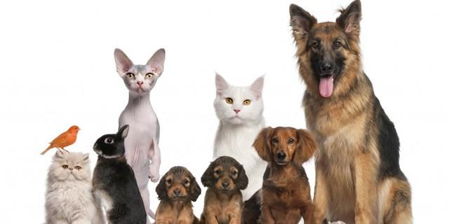 Pets En-Ru — Английские слова на тему Домашние животные