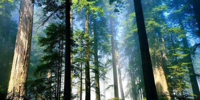 Trees En-Ru — Английские слова на тему Деревья