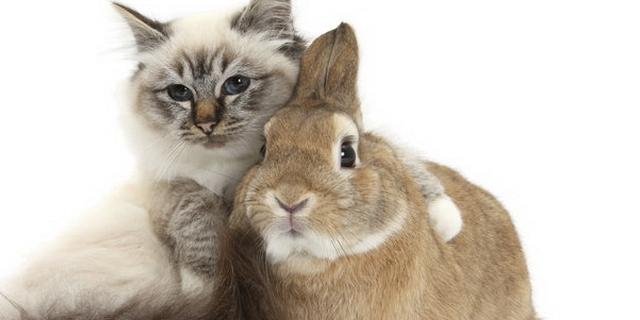 Die Tiere DE-RU — немецкие слова на тему Животные